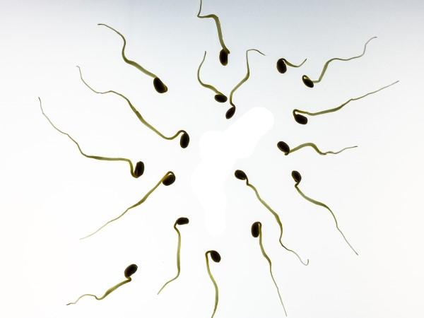 La composition du sperme