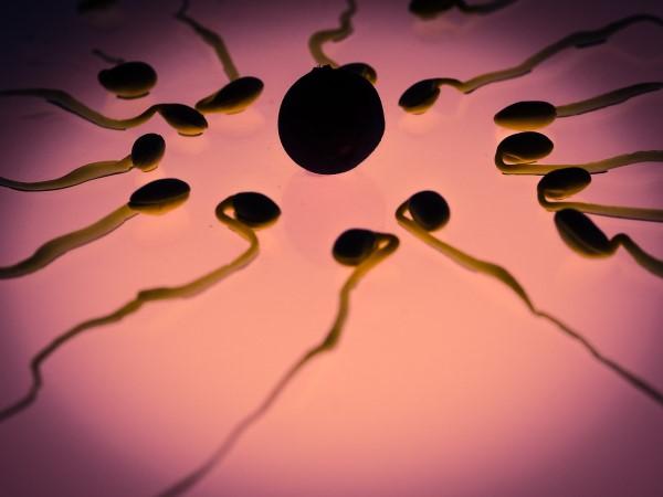 Comment retrouver un sperme opaque ?