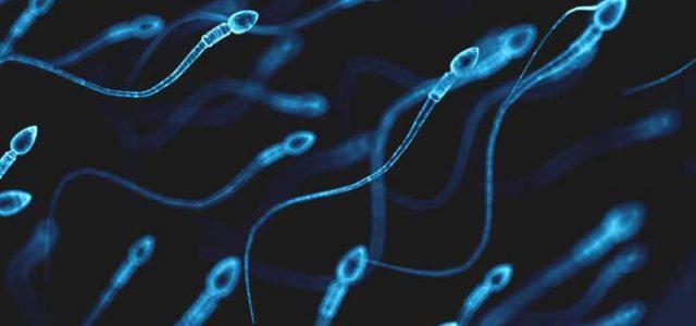 Au bout de combien de temps le sperme se renouvelle ? Explications !