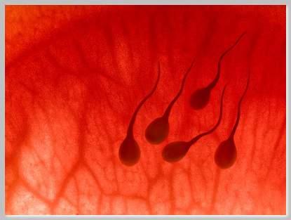 Traitement si votre sperme est brun ?