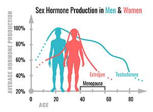 courbe de production de la testostérone